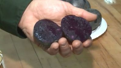Michigan State University researchers have created a purple potato and turned it into what they're calling 'blueberry chips' 3
