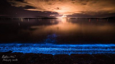 """<p>""""We ventured back down to South Arm reserve tonight to see if the Bioluminence Photoplankton were still visible,"""" Mr Holz wrote on Facebook. </p><p> """"I did not expect to arrive to car loads of families and children witnessing nature's beauty at work. It was amazing."""" </p><p> </p>"""