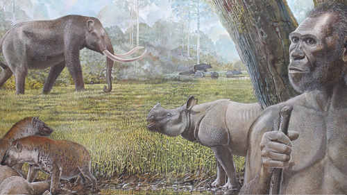 The rise and fall of savannah environments drove extinction events in Southeast Asia.