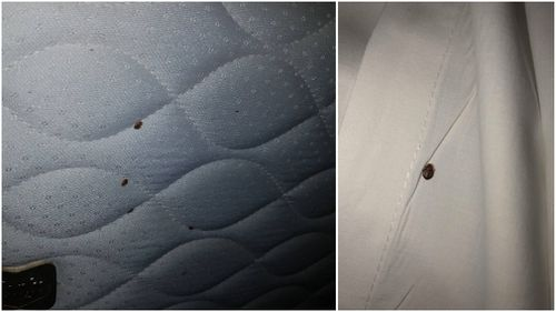 Multiple bugs were found crawling on the hotel bed. (Supplied)