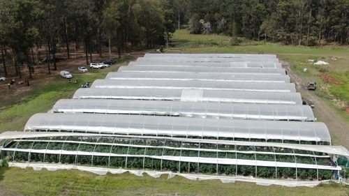 In total, more than 13,000 cannabis plants were seized.