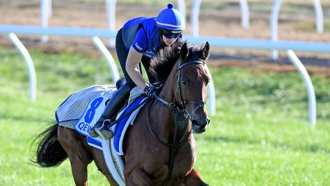 Qewy looks set to start as favourite for the Bendigo Cup.