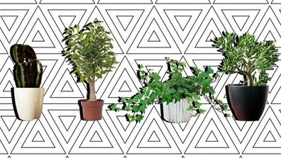 How to make sure you never kill an indoor plant again