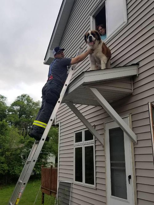 It was a joint effort to get Whiskey off the roof. Picture: Facebook