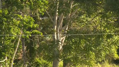 Teen critically injured on high ropes course opens his eyes