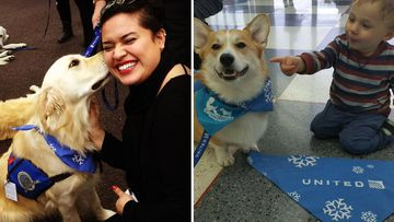 Flying home for the holidays made less stressful with dogs used to calm passengers