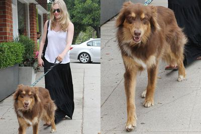 "Amanda Seyfried is eternally committed to Finn, her Aussie shepherd mix. When she got him she told a gossip website: ""He is a little guy with a big heart. He is the love of my life."" Awww."