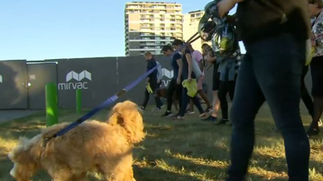 Dog owners scour the lawns of Waterfront Park for poison.