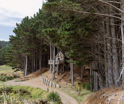 The Treehouse in the Woods, Raglan, Waikato