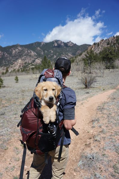 Man hiking with dog, pet-friendly holiday