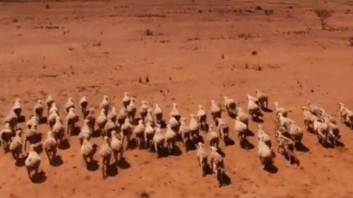 SA Farmers drought pics 1