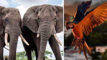 Wildlife population recovers during COVID-19 tourist slump