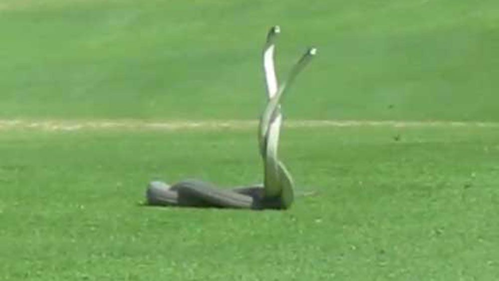 South African golf game disrupted by deadly black mambas
