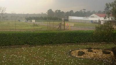 The hail hits Vineyard. (Kim Hogarth)