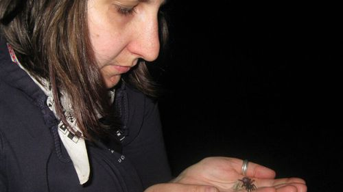 Dr Amber Beavis collecting spiders in Queensland as part of the Bush Blitz program. (Amber Beavis)
