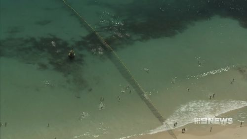 The newly installed shark barrier at WA's Cottesloe Beach has already been infiltrated, with a sneaky seal finding its way into the supposedly safe enclosure.