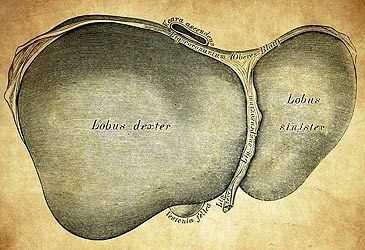 Daily Quiz: The liver is part of which organ system of the human body?