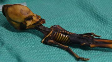 The mummified skeleton of a Chilean newborn. (Dr Emery Smith)