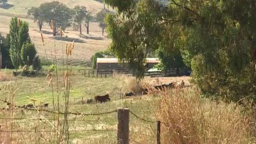 A man has died after being struck by a cow near Albury-Wodonga. (9NEWS)