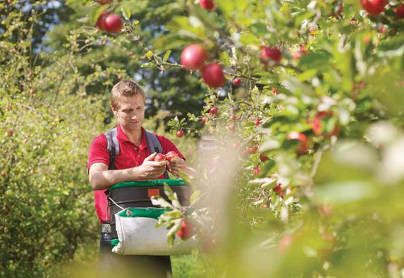 Follow the fruit trail