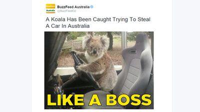 As the team at Buzzfeed Australia put it, 'Too Blazed To Be Fazed'. (Twitter, @BuzzFeedOz)