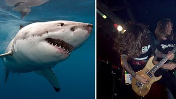 Great white sharks love death metal, documentary crew finds