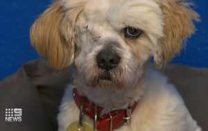 Victorian Government backflips on pet rescue ban during COVID-19