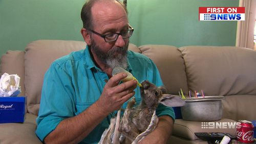 The sanctuary relies on power keep the kangaroo milk formula refrigerated, and warm up wheat bags for the joeys. (9NEWS)