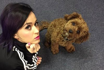 Katy Perry's down with the dog.