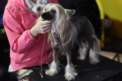 <strong>Chinese crested dog</strong>