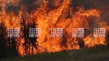 A bushfire is burning near the NSW-Queensland border.