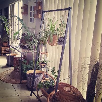 How to create an indoor hanging garden -- Kmart style