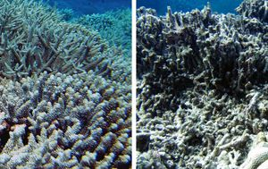 Storms thousands of kilometres away can damage Australian reefs