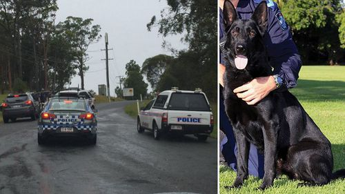 Man charged with assaulting police dog and ramming police car in Coomera Waters