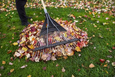 <strong>Raking the backyard - 204 calories an hour</strong>