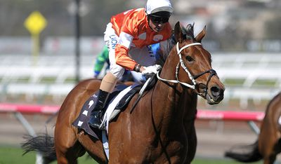 <p>Who Shot TheBarman (NZ)</p><p>Jockey Blake Shinn</p><p>Trainer Waller </p><p>Barrier 6</p>