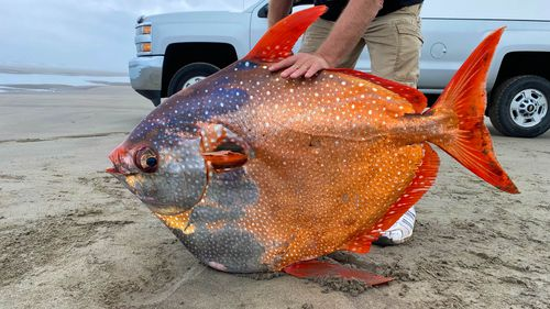 """The opah fish is considered a """"rare to the Oregon Coast."""""""