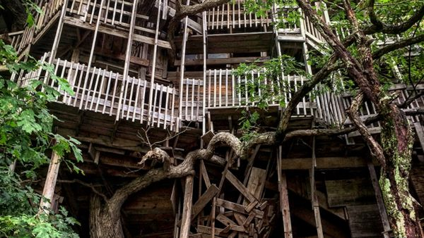Tree House Inside With Inside The Worldu0027s Largest Tree House 9travel