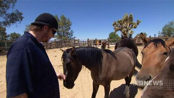 War veterans' wounds healed by wild horse taming