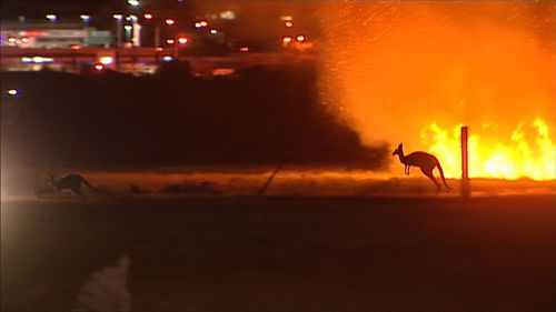 A kangaroo flees the blaze. (9NEWS)