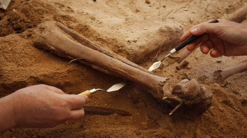 Scientists believe the people died after the Batavia became shipwrecked off the coast in 1629.