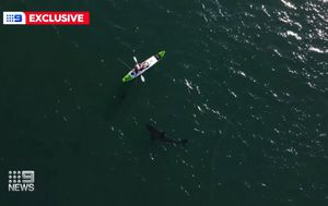 Fisherman films giant shark swimming towards kayak