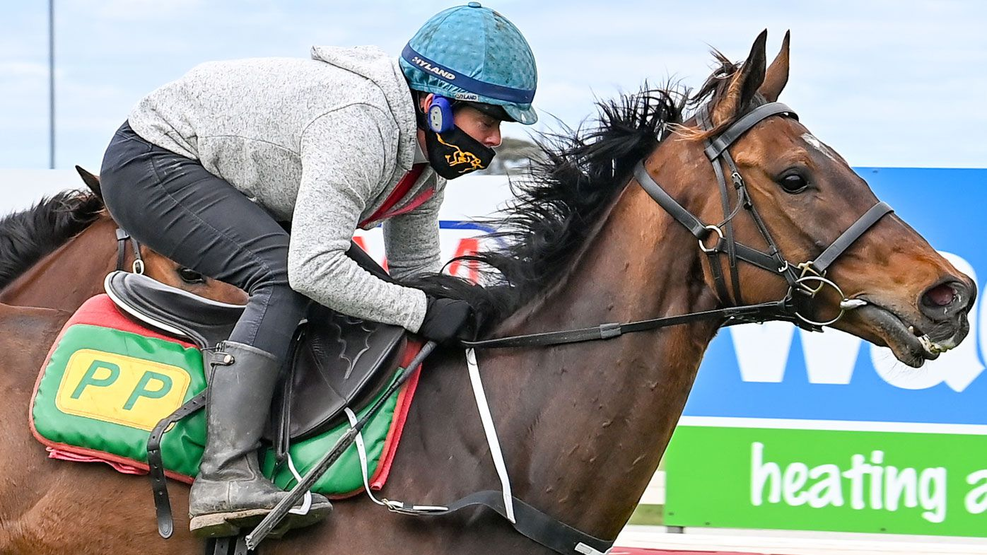 Melbourne Cup horses: Shane Crawford's tips for picking the great race's winner – Wide World of Sports