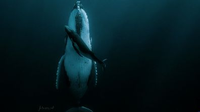 Jasmine Carey: Humpback whale photo sees photographer walk away with HIPA grand prize