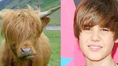 Nature's cutest Bieberlikes!