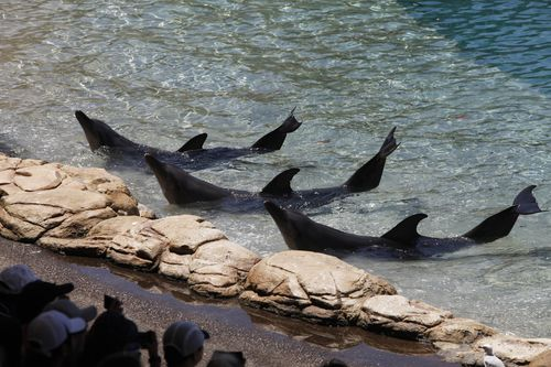There are only two captive dolphin venues left in Australia.
