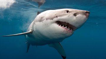 Shark attack news & alerts