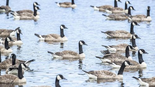 Bird pests dumping hundreds of kilograms of poo in New Zealand lake