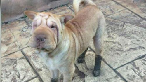Hugo the dog freed from death row