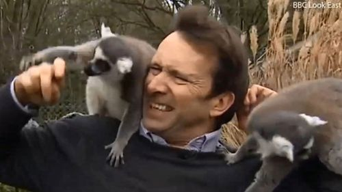 The journalist was mobbed by a group of lemurs. (BBC Look East)
